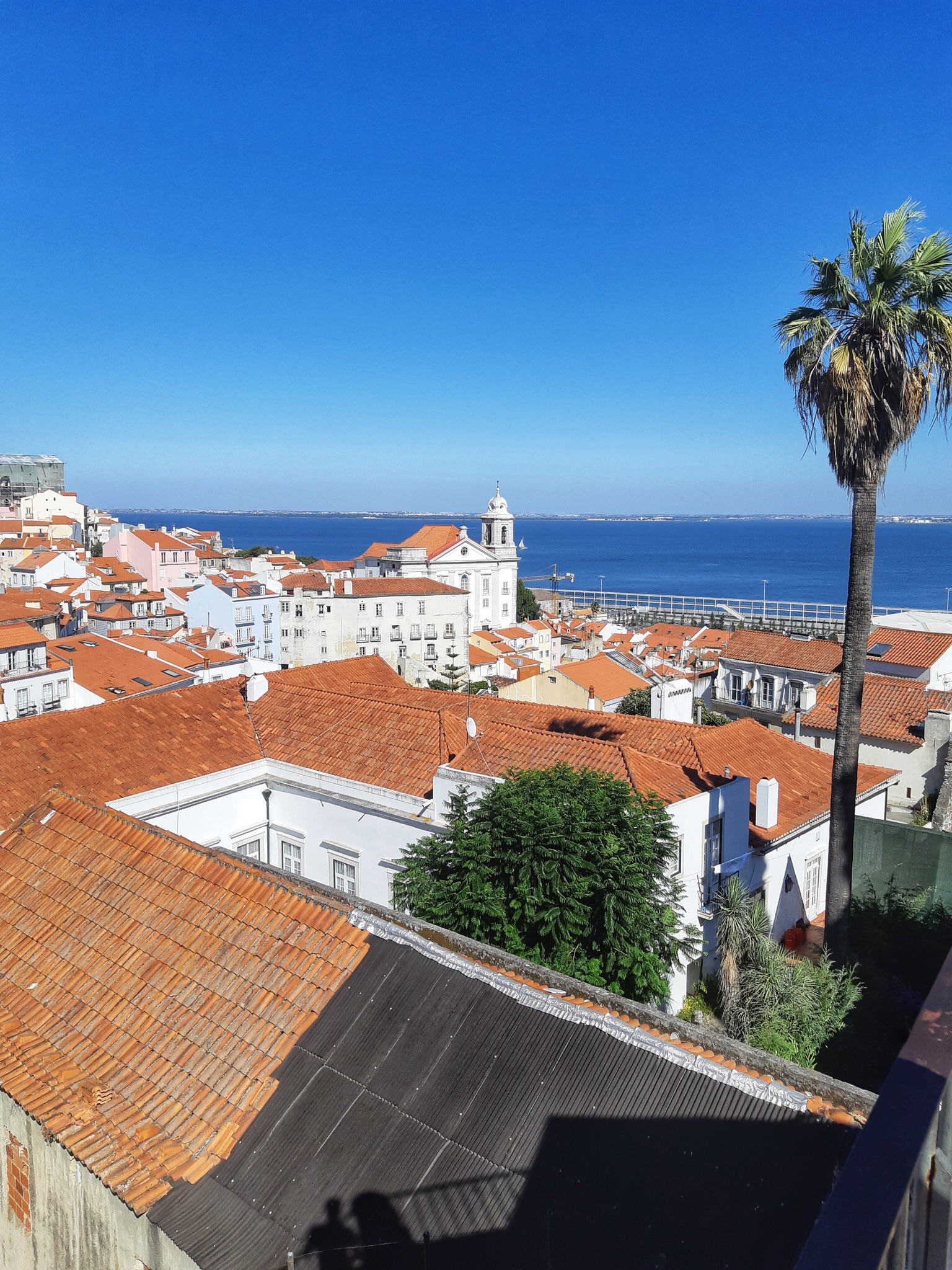 A view of the stone rooftops of Lisbon with a palm tree to the right and the ocean in the background